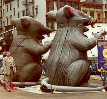 Rats as protest symbols, 2000